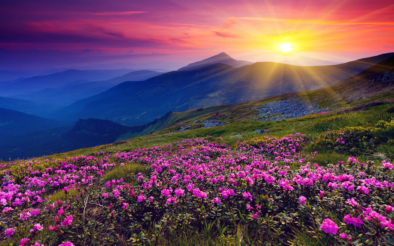 nature flowers photo picturesque
